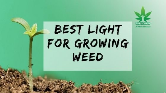 best light for growing weed