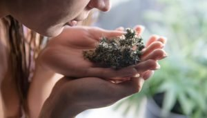 How to Grow Weed Without Smell